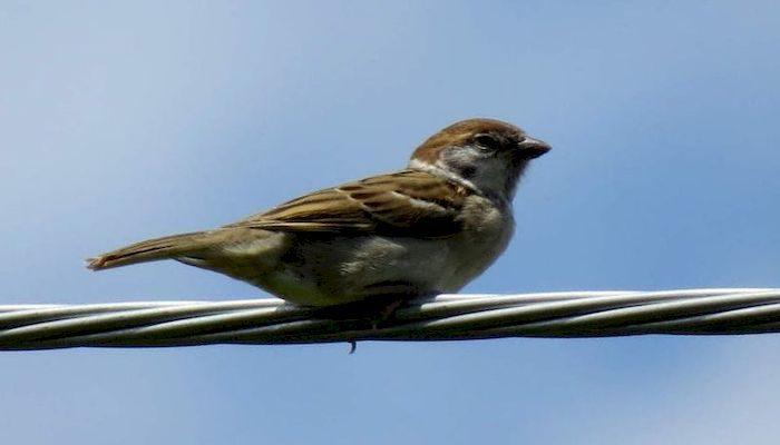 Птица на электрическом проводе
