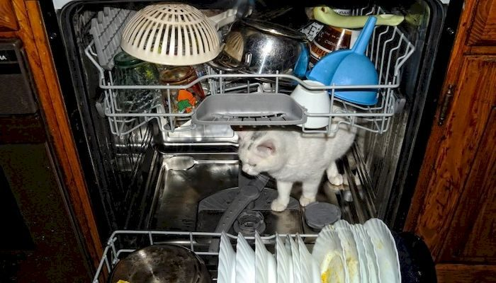 Посудомоечная машина на кухне, фото